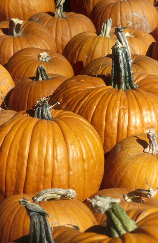 MICRO AND MACRO VIEWS OF PUMPKINS Group Of Pumpkins