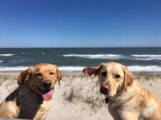Kody and Bauer Goldens